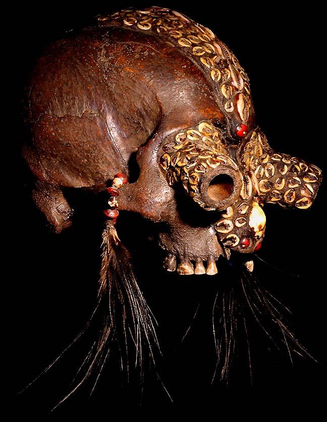 merauke marid anim tribe human headhunting skull 2 human skull beads ...