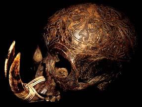Human Trophy Skulls Asmat Ancestor Skulls DAYAK NAGA IFUGAO Skull
