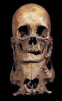 Human Trophy Skulls Asmat Ancestor Skulls DAYAK NAGA IFUGAO